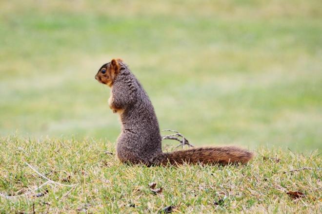 Chesaning squirrel_Candy_Spiegel