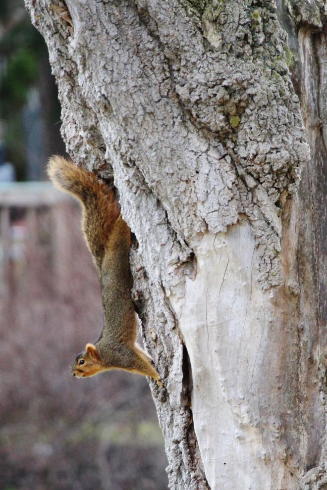 Chesaning squirrel_Candy_Spiegel2
