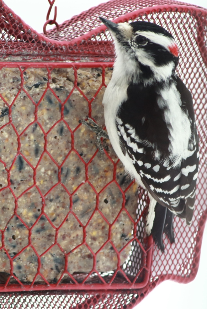 birds3byCandySpiegel