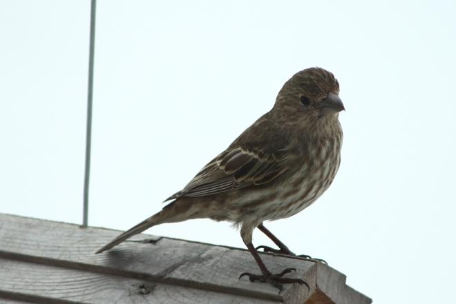 birds7byCandySpiegel