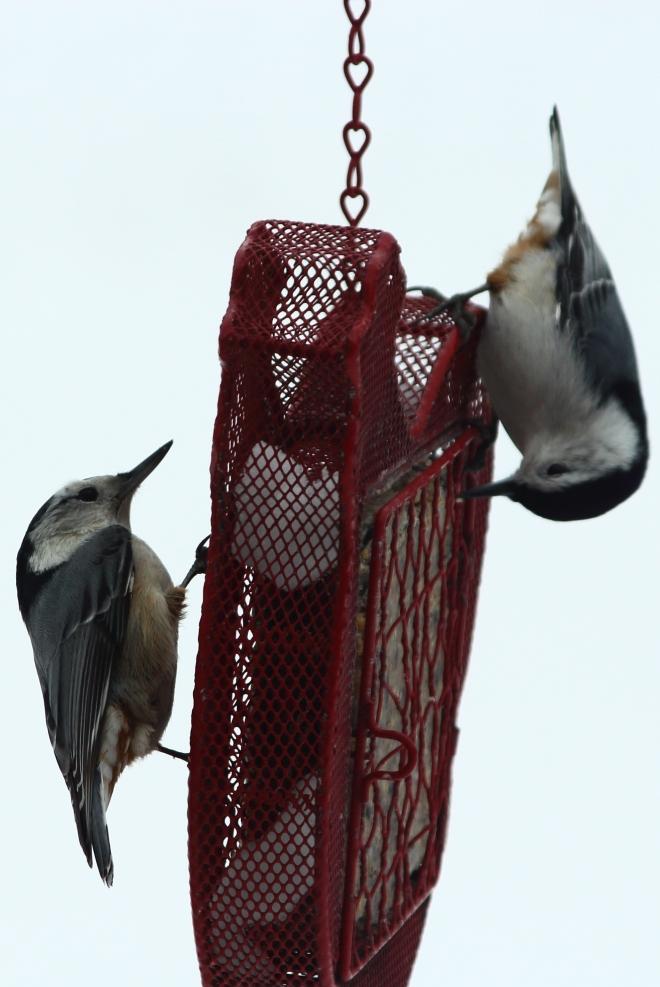 birds9byCandySpiegel