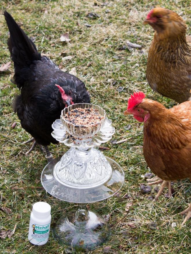 etchall_birds_candy_spiegel-3