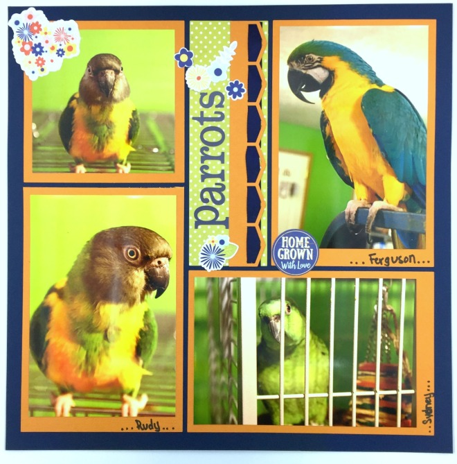 parrots-by-candy-spiegel